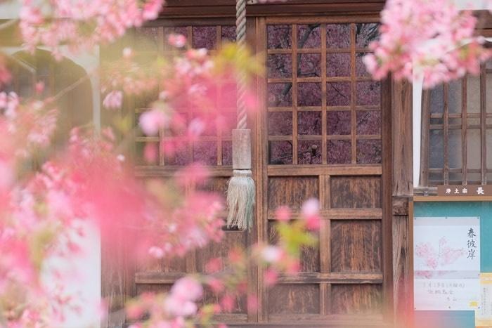 FUJIFILM X-T30で撮った桜