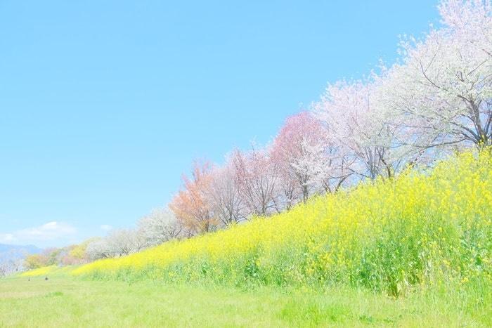 FUJIFILM X-T30で撮った桜並木